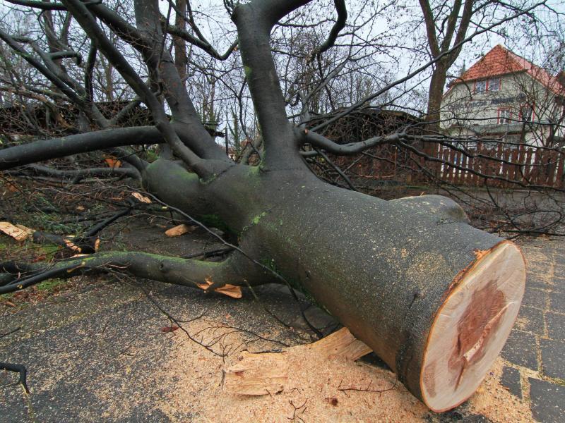 Bild zu Sturmschäden