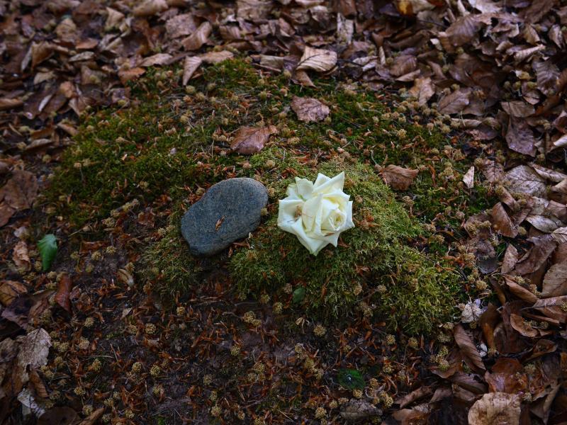 Bild zu Stein und weisse Rose liegen auf Moos