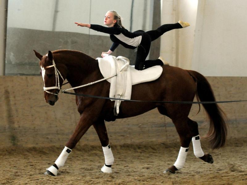 Turnen Pferd