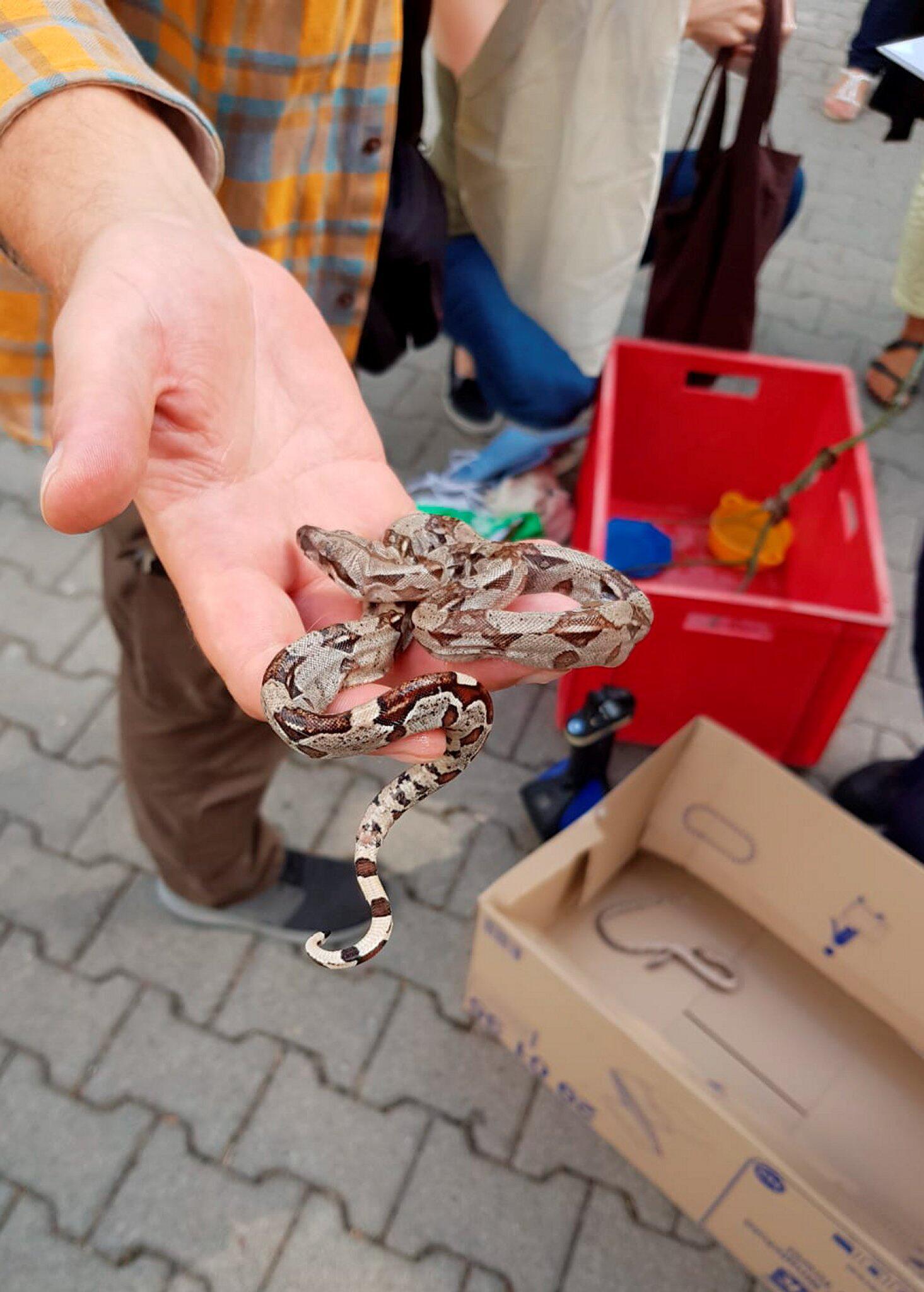 Frankfurt: Feuerwehrleute fangen zehn Schlangen in Kindergarten | GMX.CH