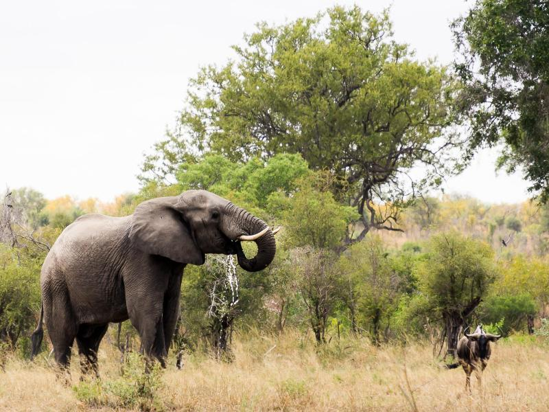 Bild zu Krüger-Nationalpark