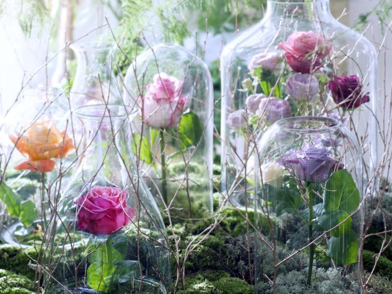 Rosen unter glaskuppeln dekorieren gmx ch for Zimmer deko rosen