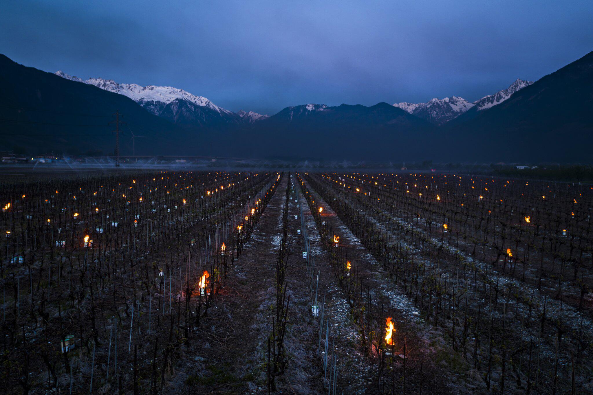 Bild zu Frostschutz in den Weinbergen in der Schweiz