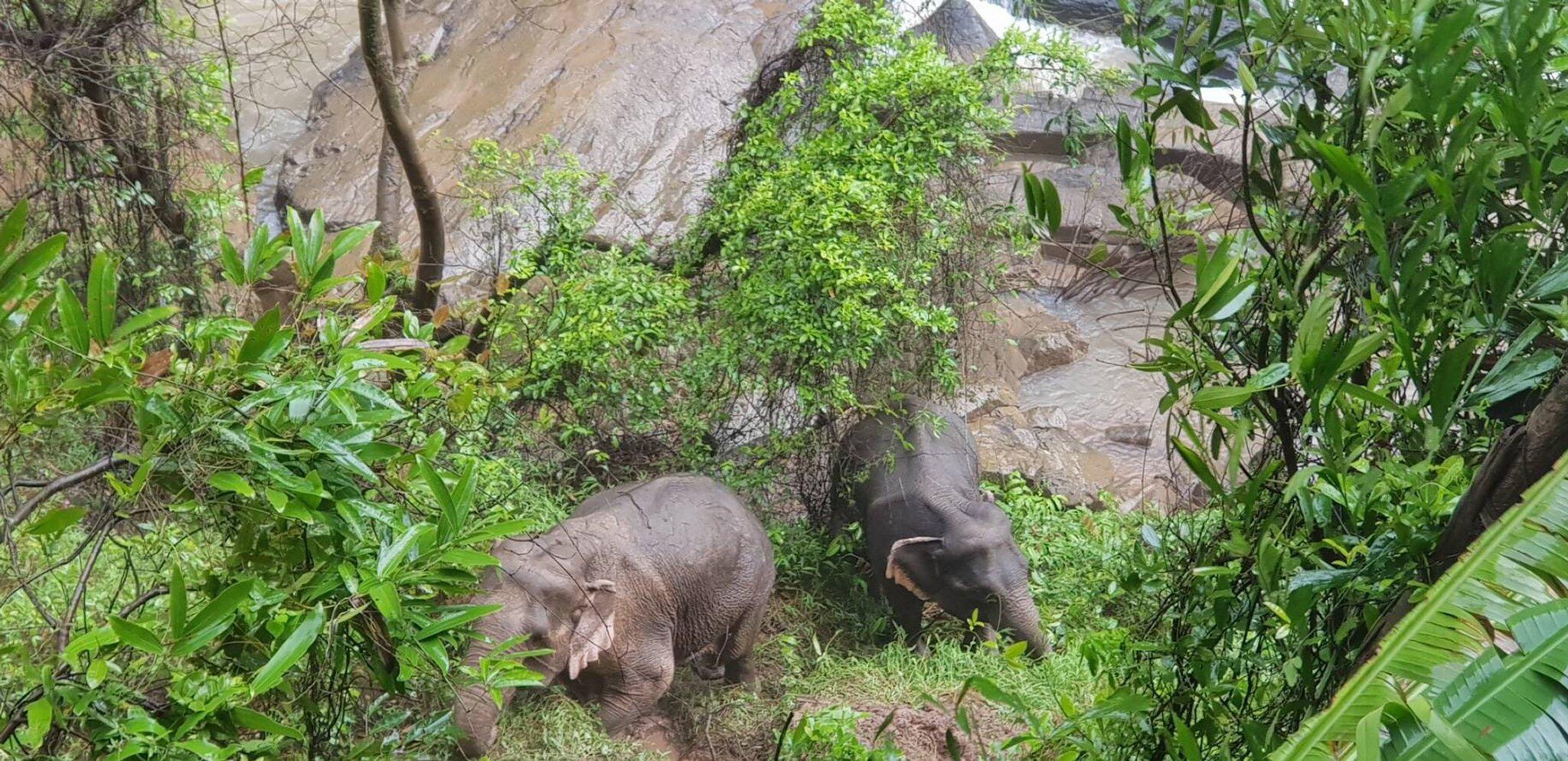 Bild zu Sech Elefanten ertrinken im Wasserfall