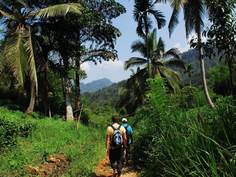 Bild zu Wandern zwischen Palmen