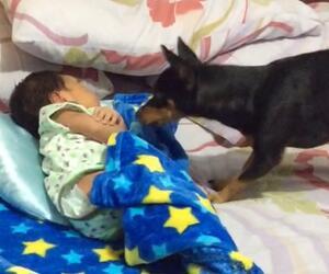 Hund deckt Baby zu
