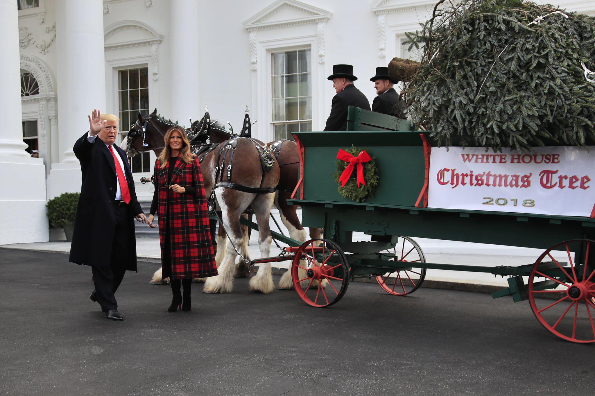 Bild zu Weihnachtsbaum für das Weisse Haus