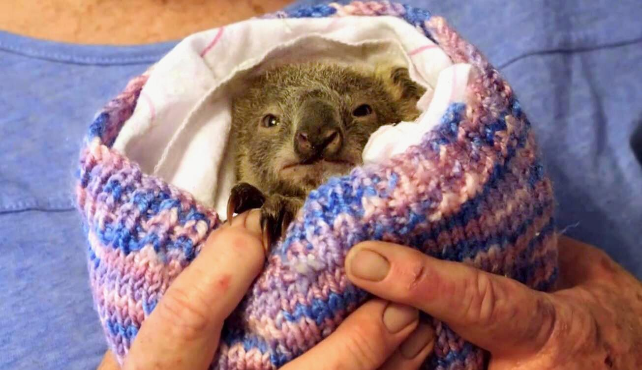 Bild zu Koala