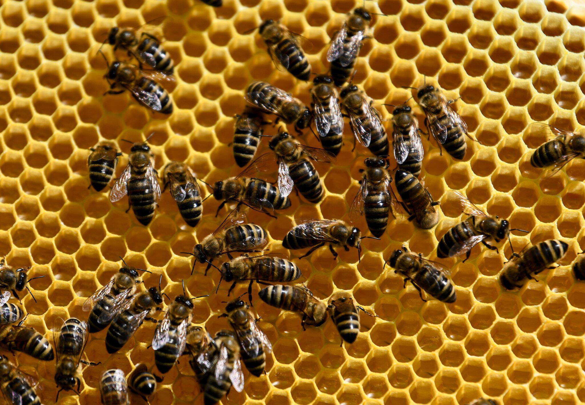 Bild zu Bienen