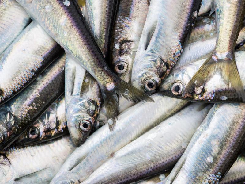 Bild zu Fische