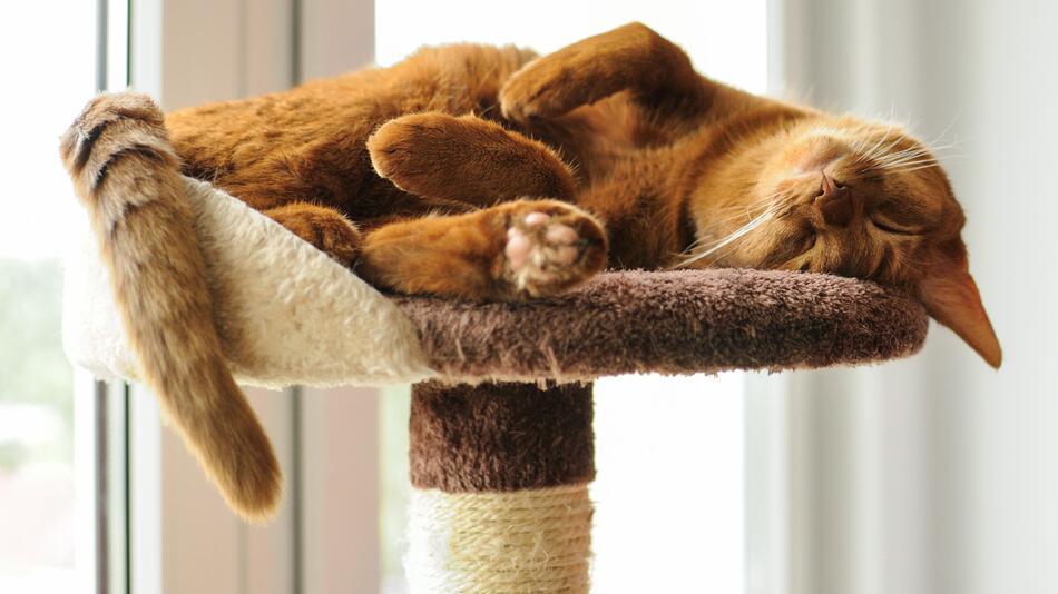 Katze, Katzenhalter, Kratzbaum, Futterautomat, Katzenzubehör, Tiere