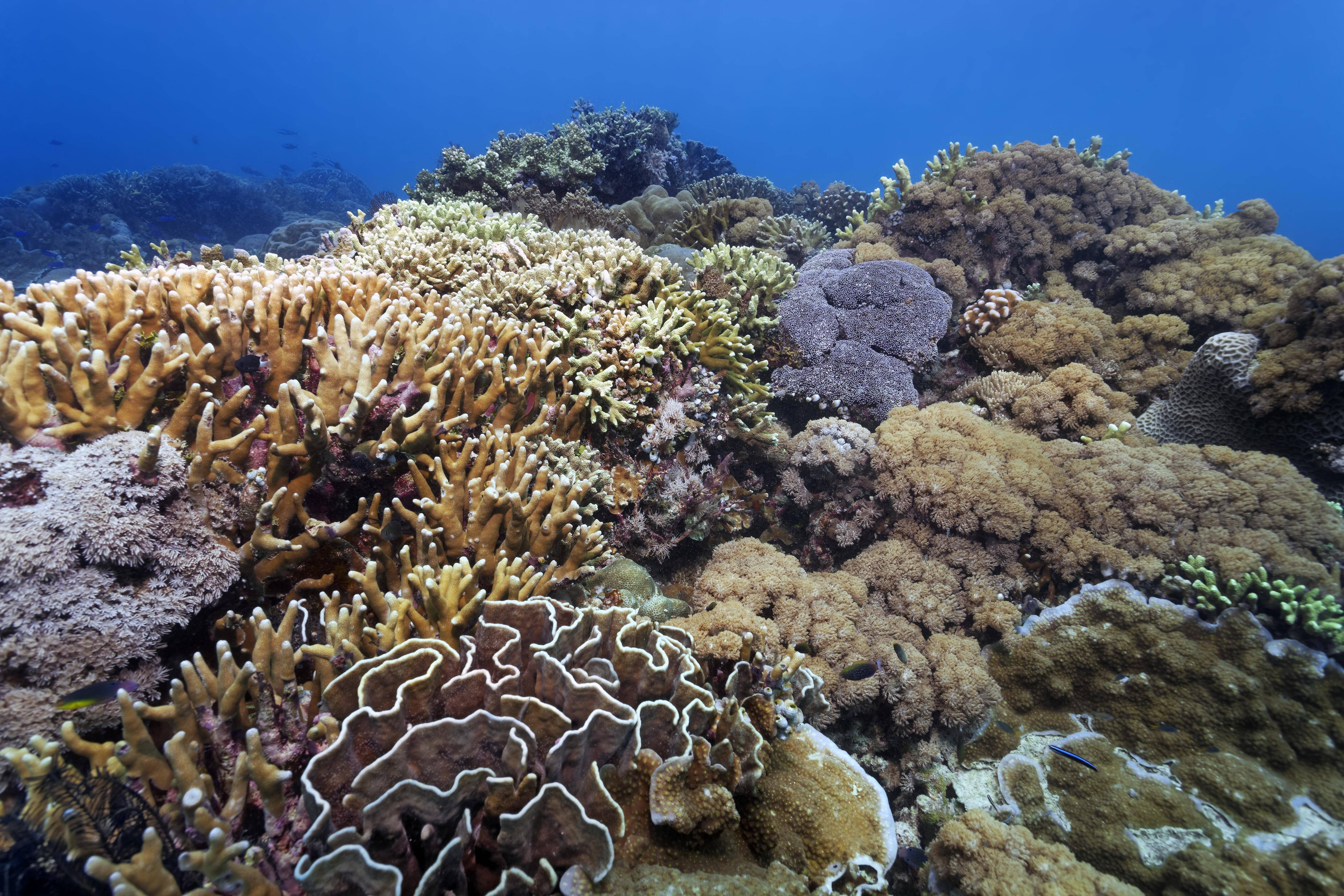 Bild zu Great Barrier Reef, Klimawandel