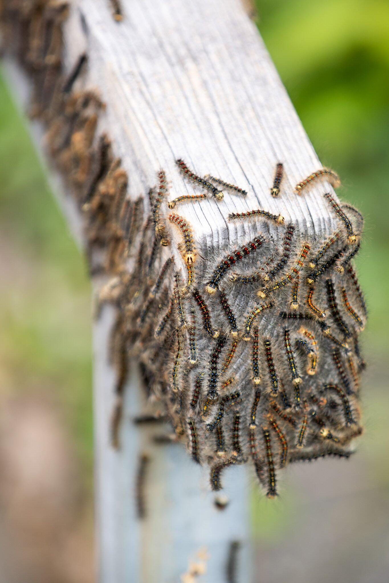 Bild zu Zunehmende Insektenplagen