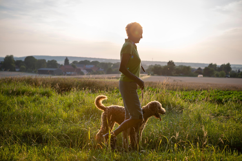 Bild zu Spaziergang, Sommer, Hund