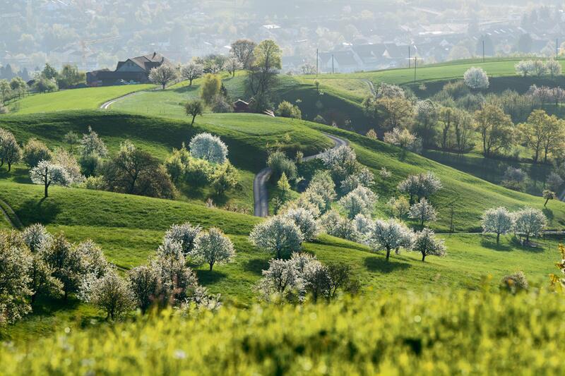 Bild zu Frühling im Jurapark im Aargau