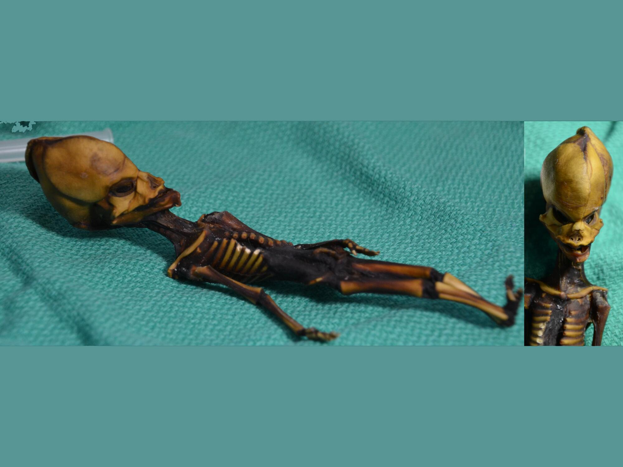 Bild zu Ata Mumie