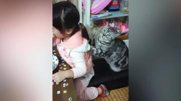 Bild zu Mädchen, Katze, Massage, Kraulen
