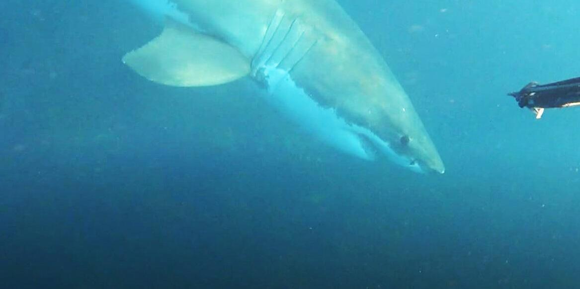 Bild zu Hai