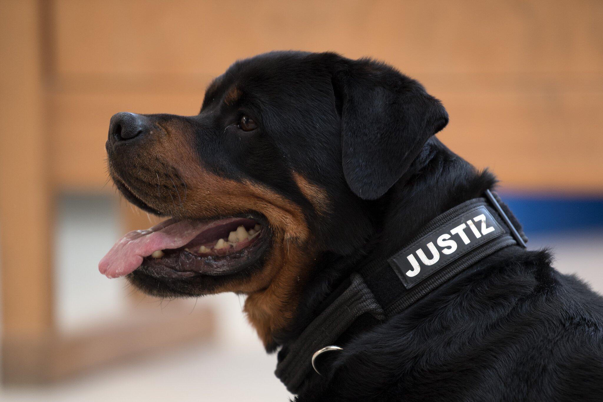 Bild zu Drogen- und Handy-Spürhunde im Gefängnis