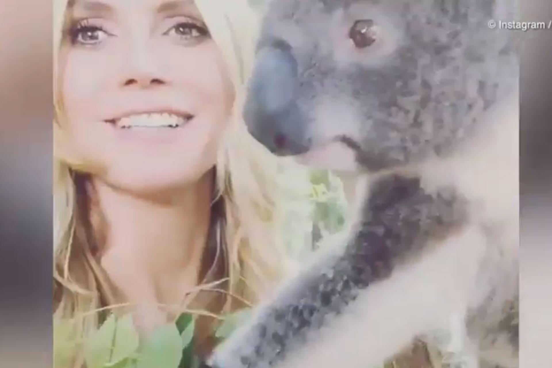 Bild zu Kleiner Fremdflirt: Heidi Klum kuschelt jetzt mit Koala Harry