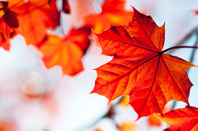 Die Schönsten Deko Ideen Für Den Herbst Zum Basteln Und
