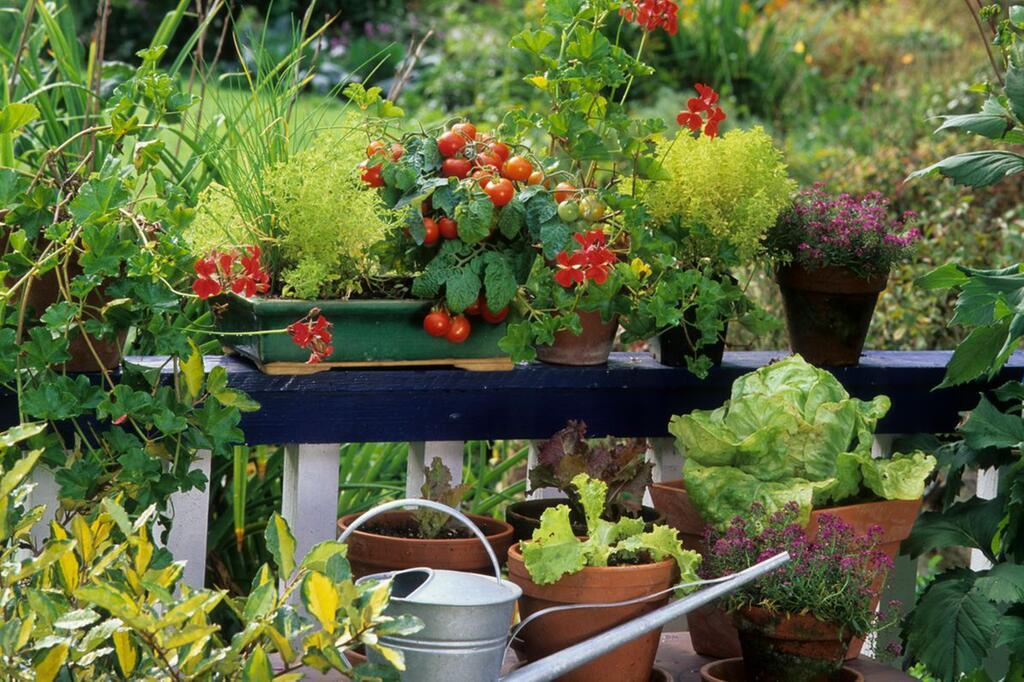 Gemüse, Balkon, anpflanzen, Pflanzen, Garten, Gemüsebalkon