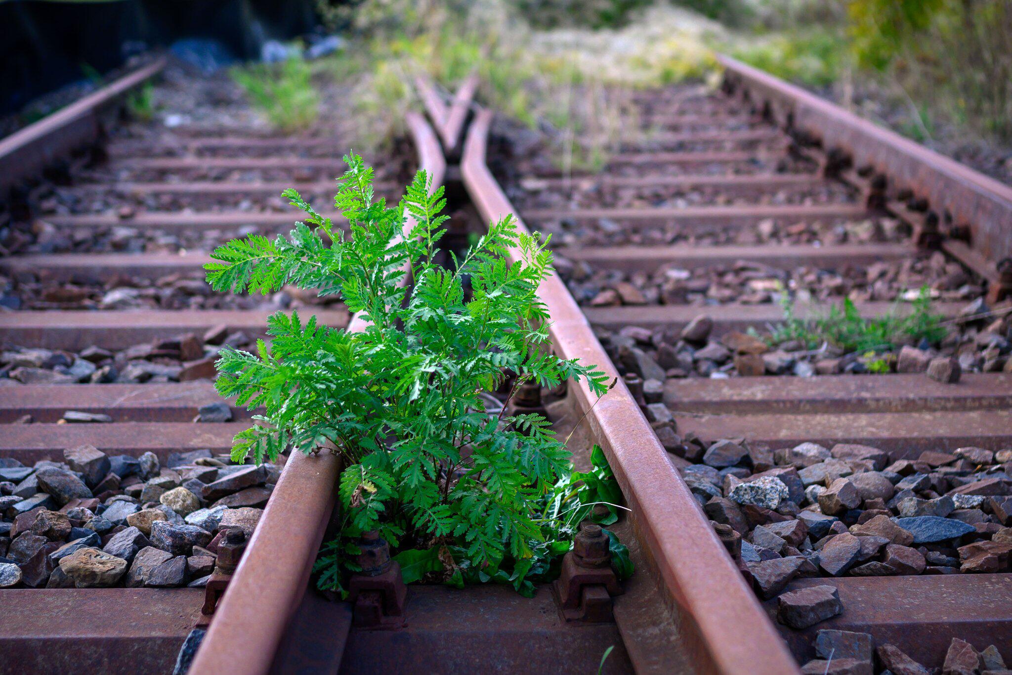 Bild zu Stillgelegte Bahnstrecke