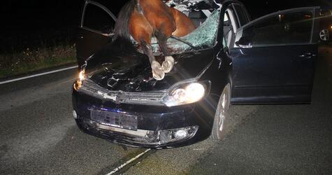 Pferd kracht durch Windschutzscheibe