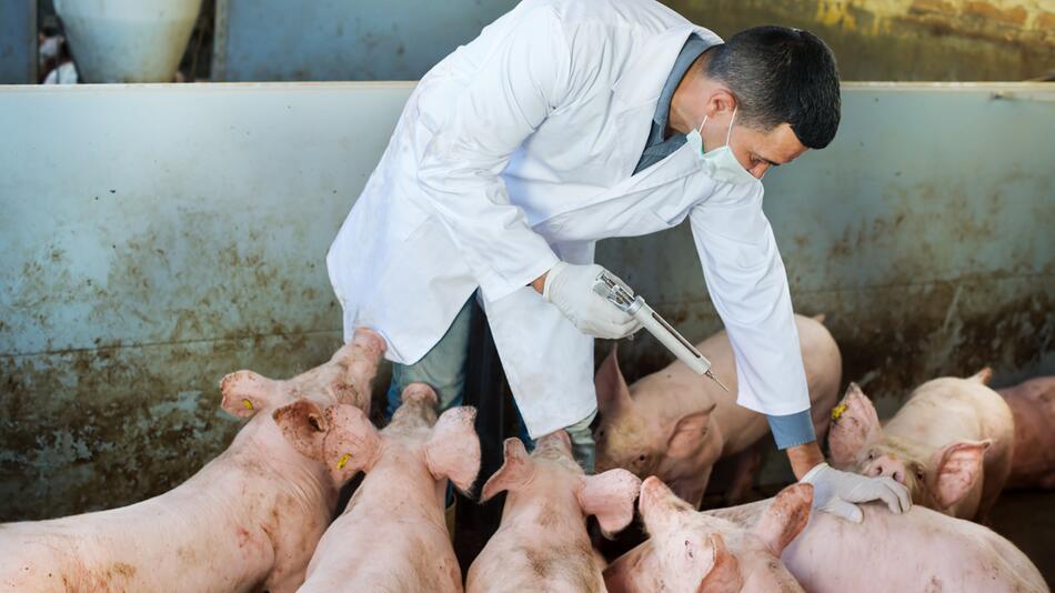 Bestimmte Antibiotika für Tiere sollten verboten werden.