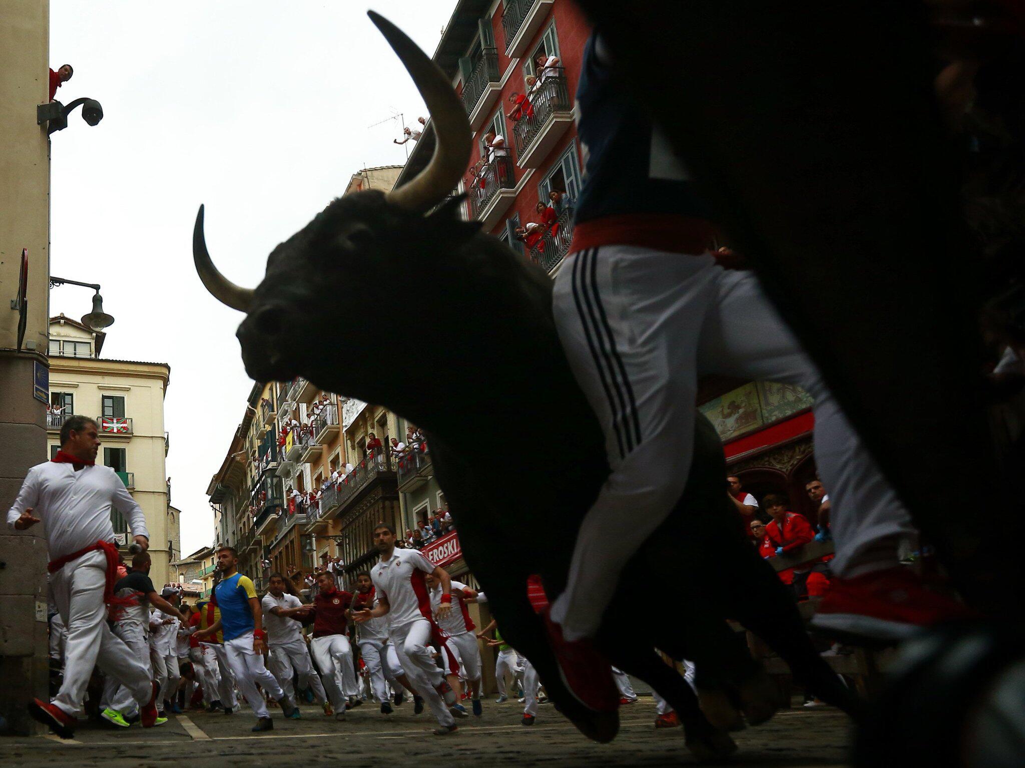 Bild zu Stierhatz in Pamplona