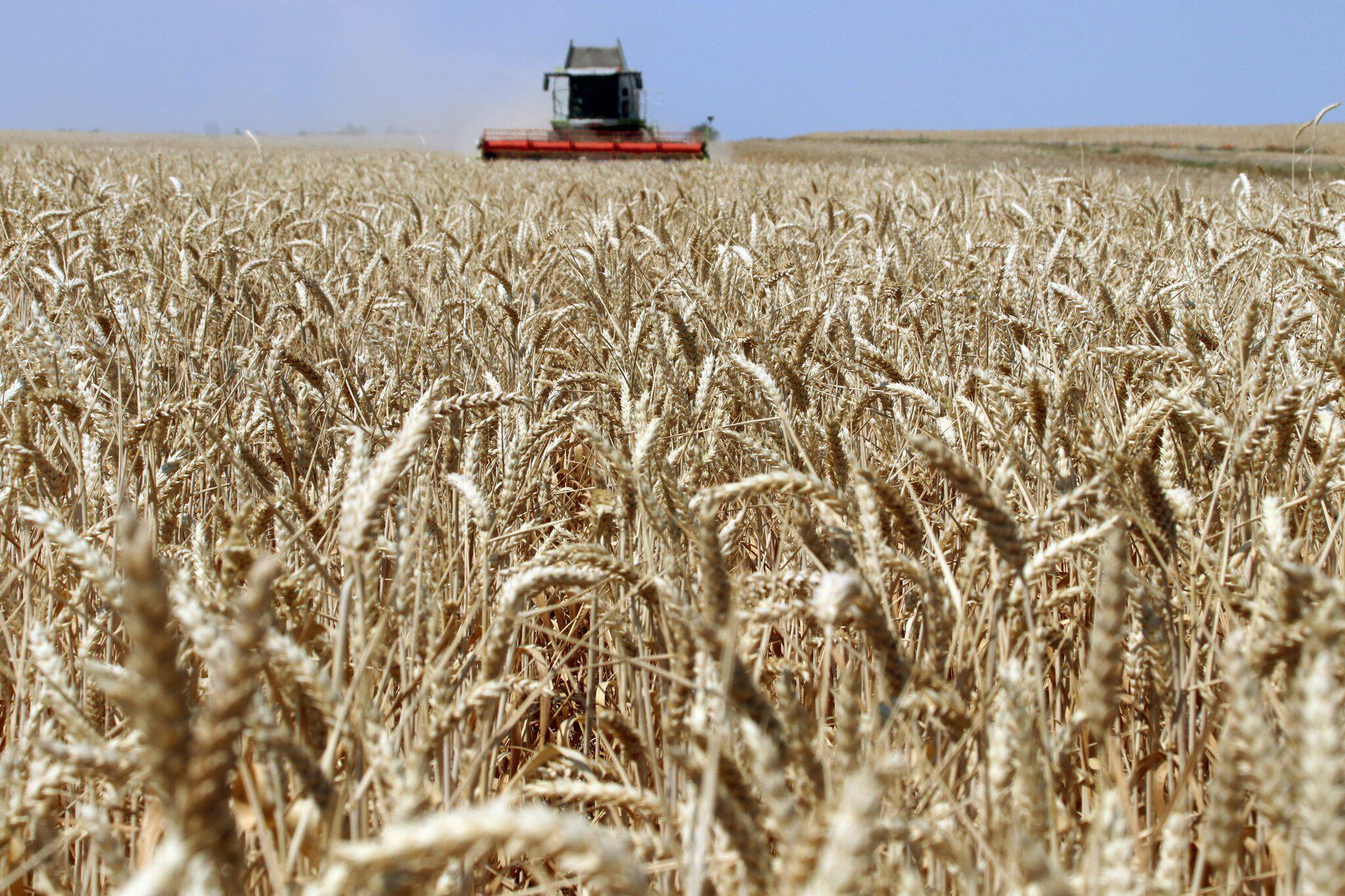 Bild zu Erntestatistik bestätigt massive Dürre-Einbussen bei Getreide