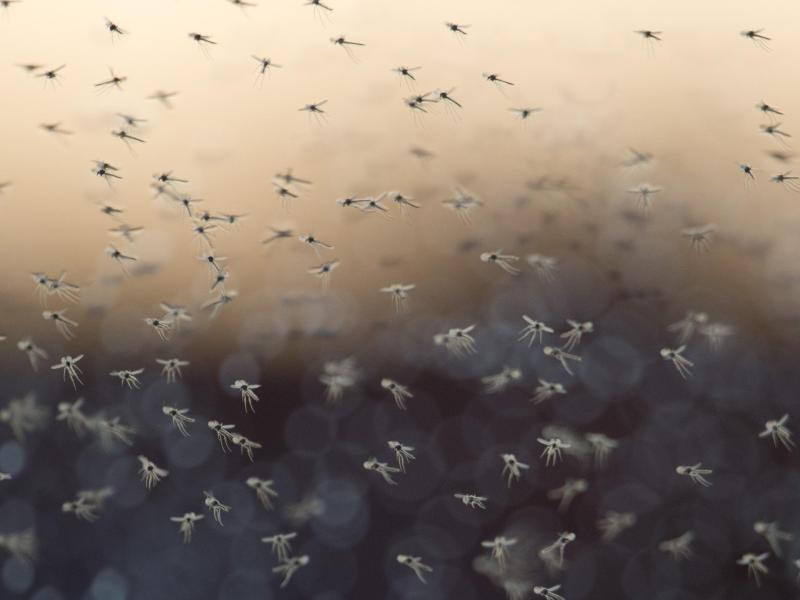 Die Parasiten die Quellen des Kohlenstoffes