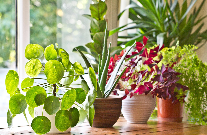 Bild zu Pflanzen, Wasser, Blumen, Giessen, Urlaub, Bewässerungssystem, Automatisch