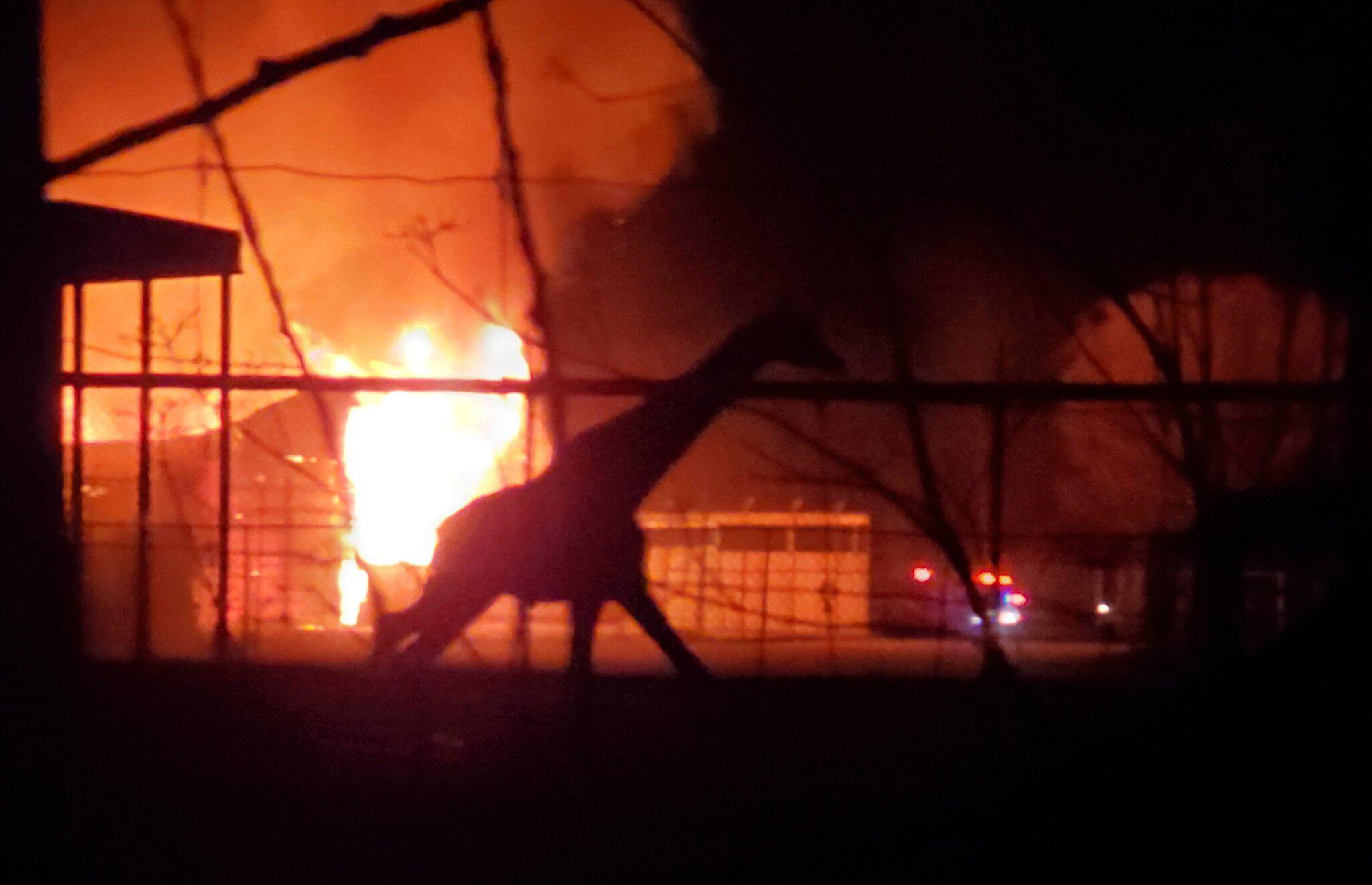 Bild zu Brand in Wildpark