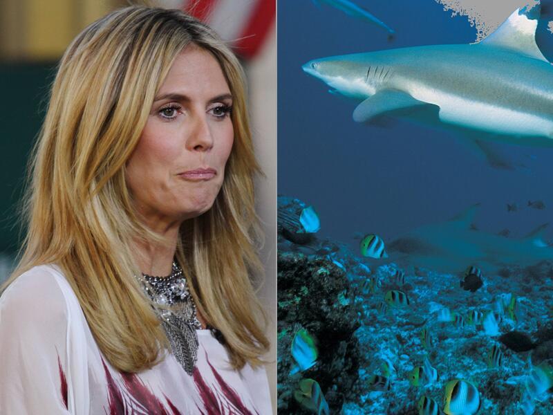 Bild zu Heidi Klum und der Hai