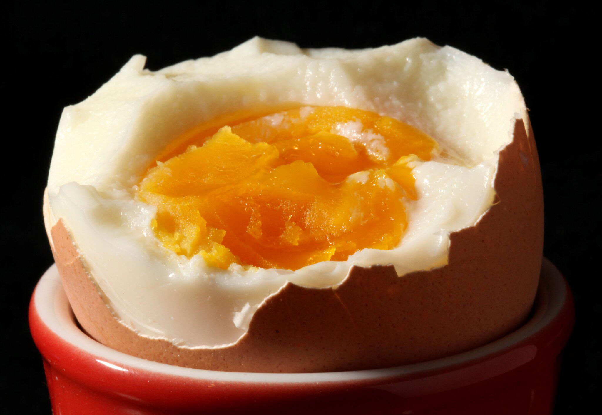 Bild zu Ei, Fupronil, Gift-Eier, Insektizid
