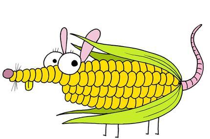 Die Mais