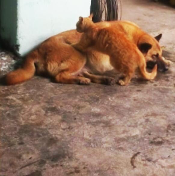 Bild zu Katze, Hund