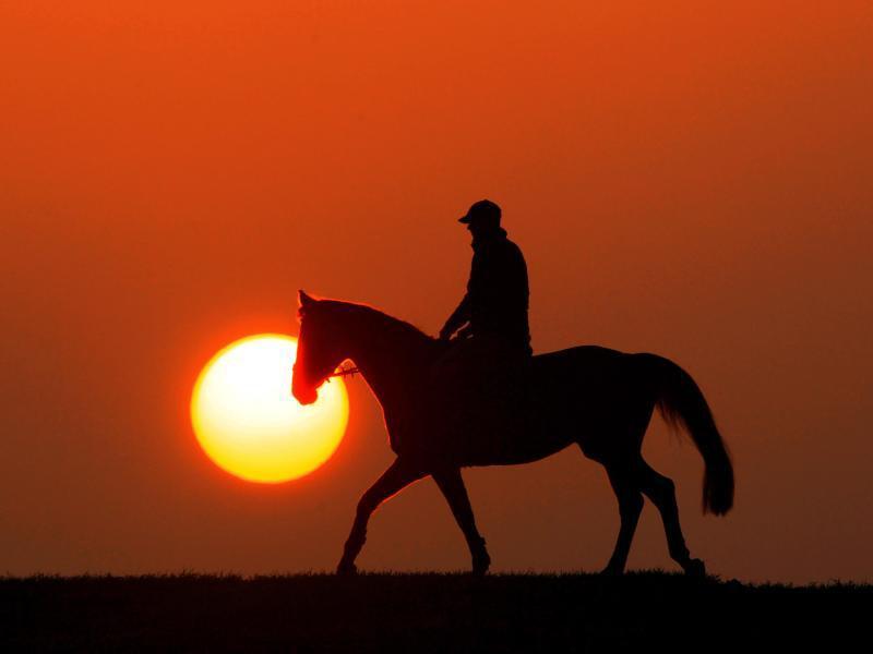 Bild zu Reiter und Pferd im Sonnenuntergang