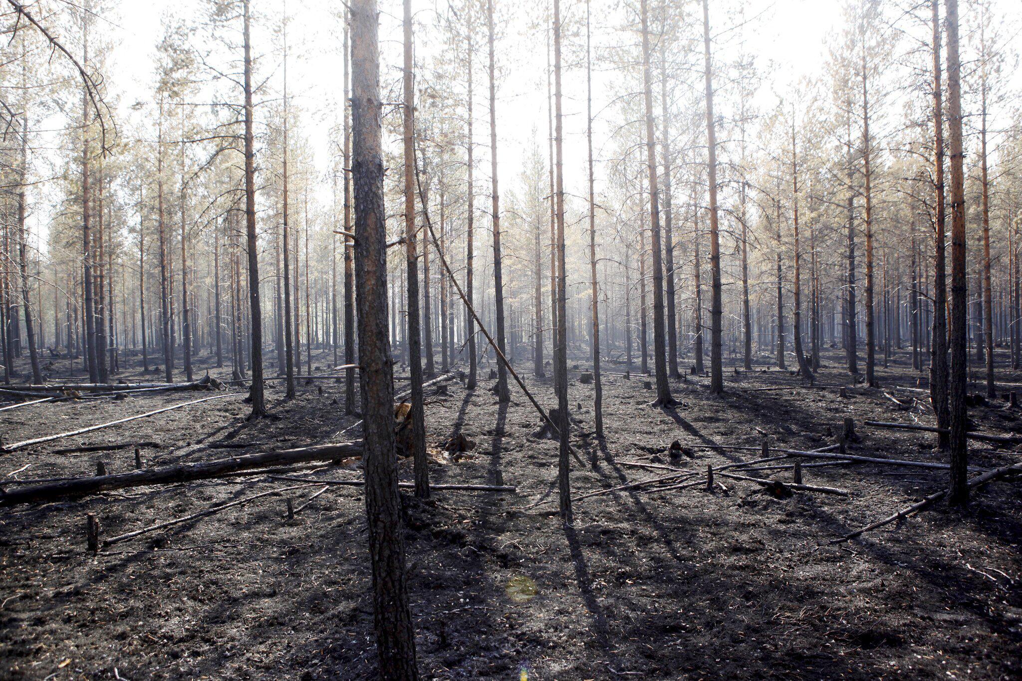 Bild zu Brände, Schweden, Waldbrand