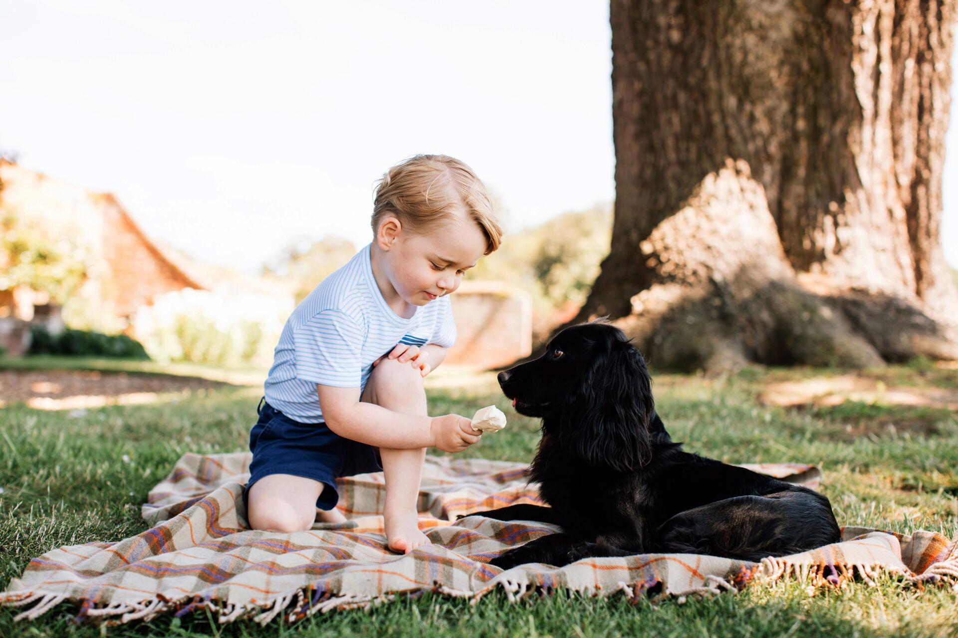 Bild zu Prinz George, Hund, Eis, Geburtstag