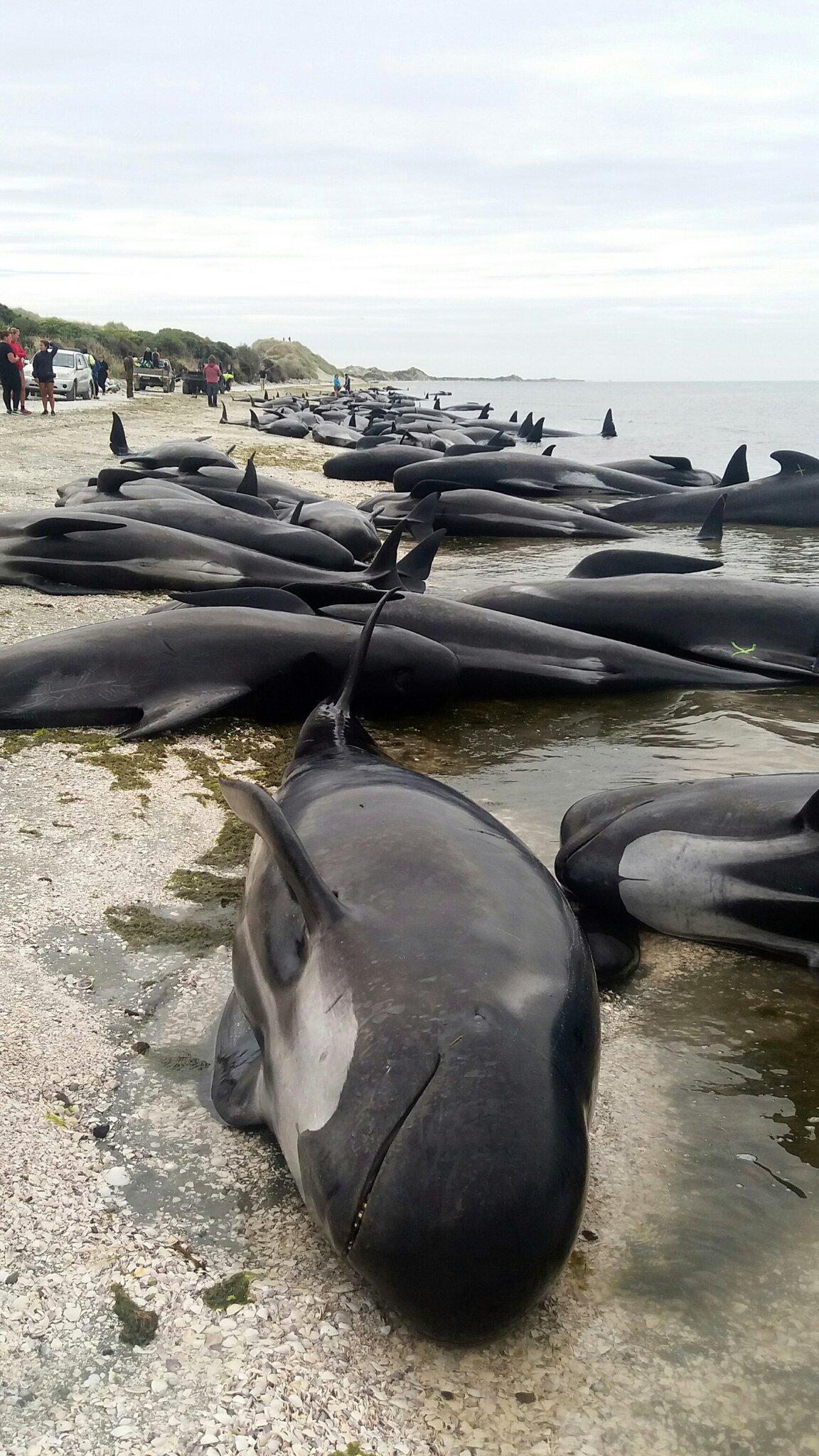 Bild zu Wale, Neuseeland