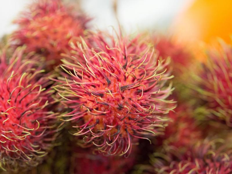 Bild zu Rambutan-Früchte