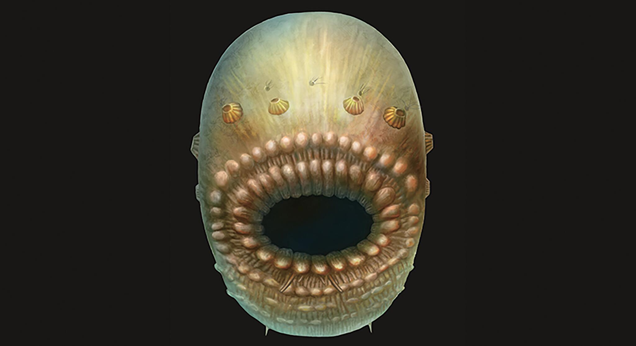 Bild zu Saccorhytus.