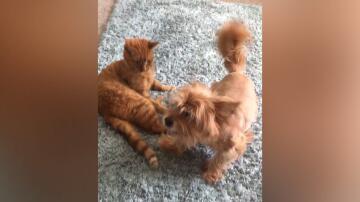 Bild zu Hund liebt Katze