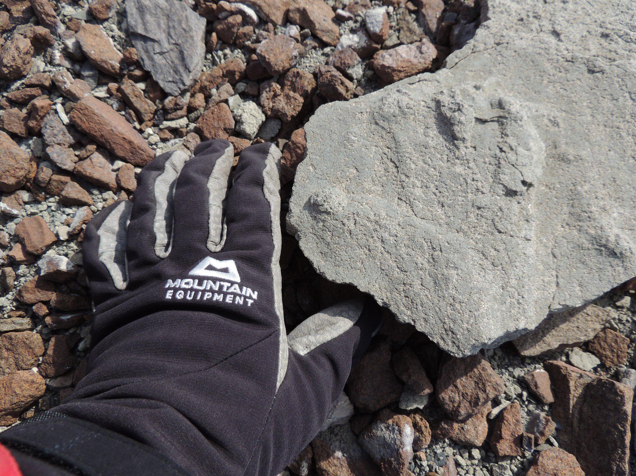 Bild zu 200 Millionen Jahre alter Saurier-Fussabdruck
