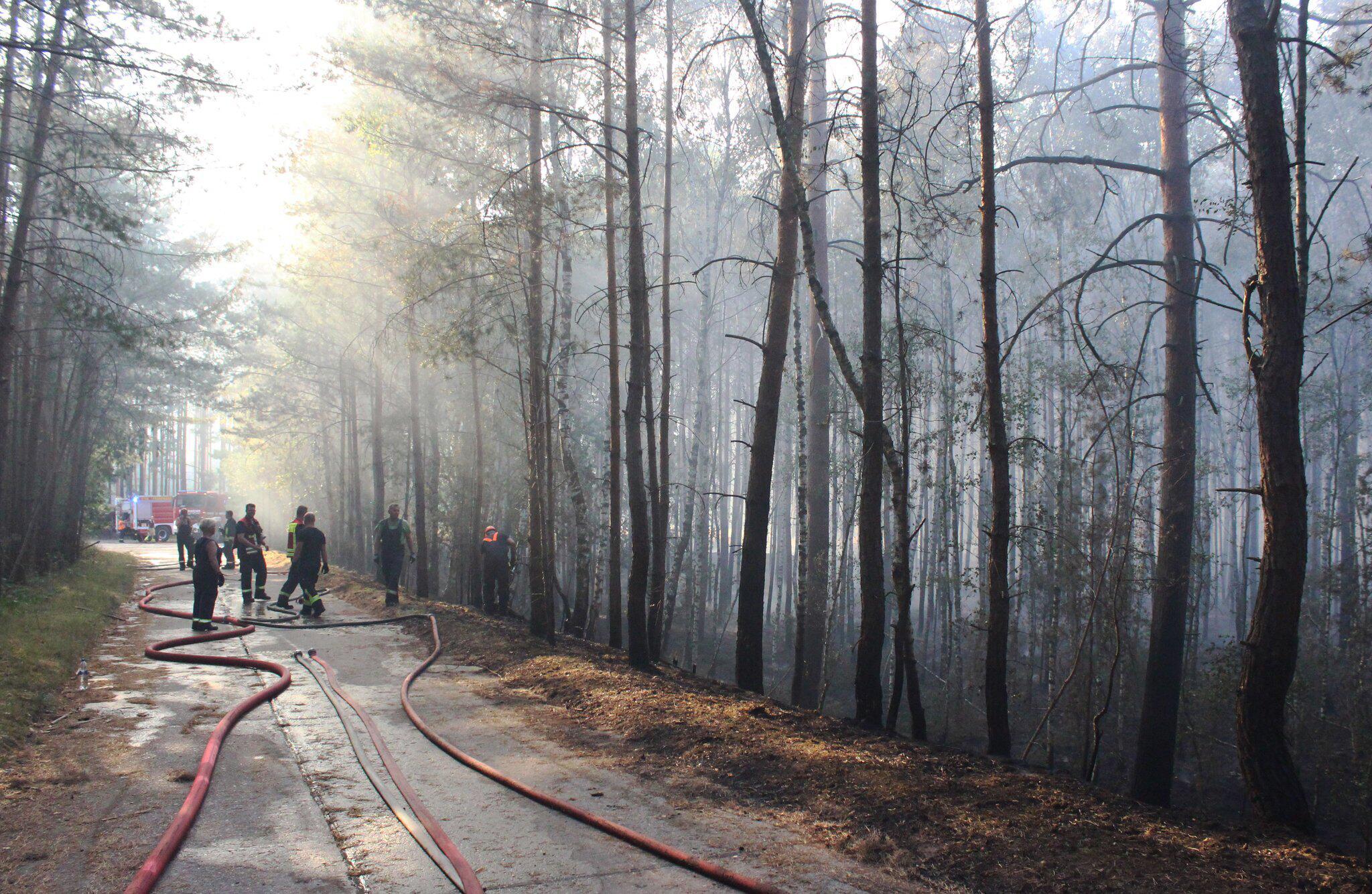 Bild zu Grosser Waldbrand bei Potsdam