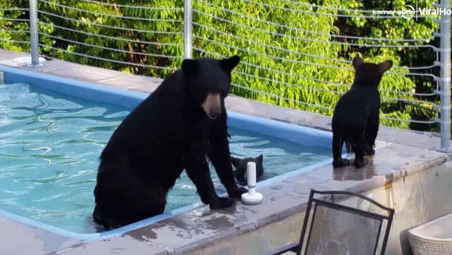 Bild zu Bärenmama plantscht mit Kindern im Pool